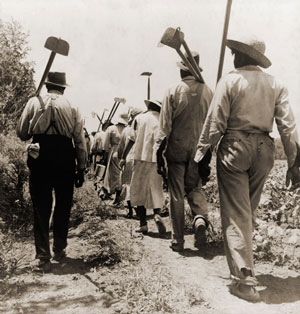 African American Farmworkers